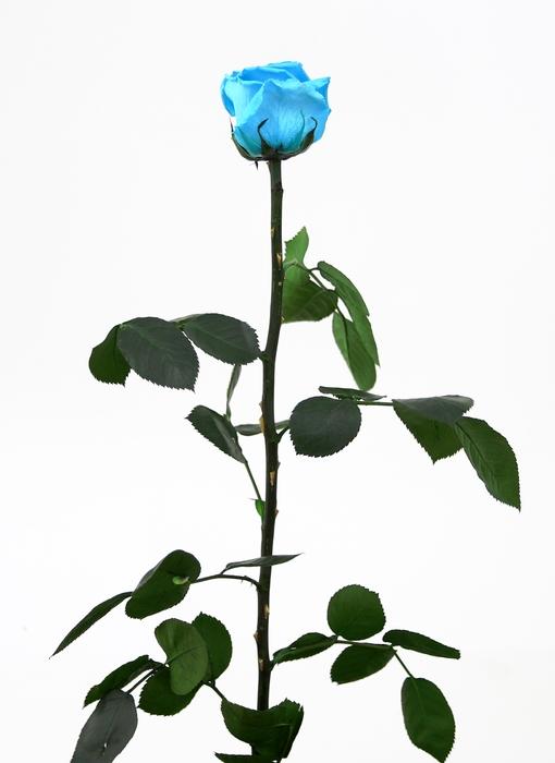 <h4>Roos op steel standard Turquoise</h4>