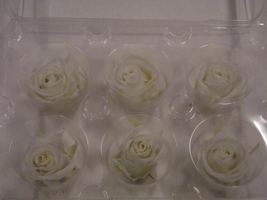 <h4>R Prs Ivory/cream Petite</h4>