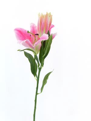 <h4>Af Lily Dark Pink</h4>