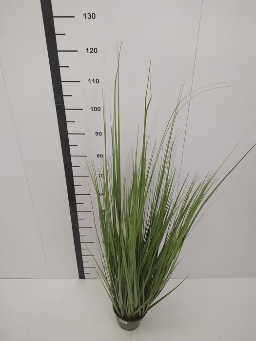 """<h4>48"""" Grass W / Pot verde</h4>"""