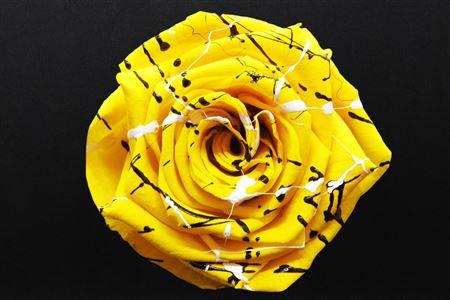 <h4>Pr 1.5 Festival Yellow Xl</h4>