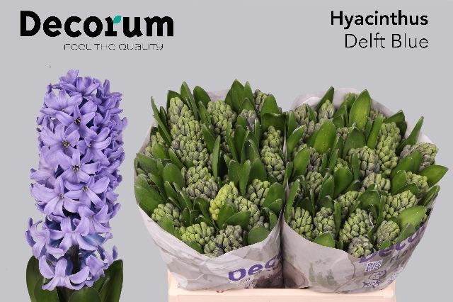 <h4>HYAC BLUE</h4>