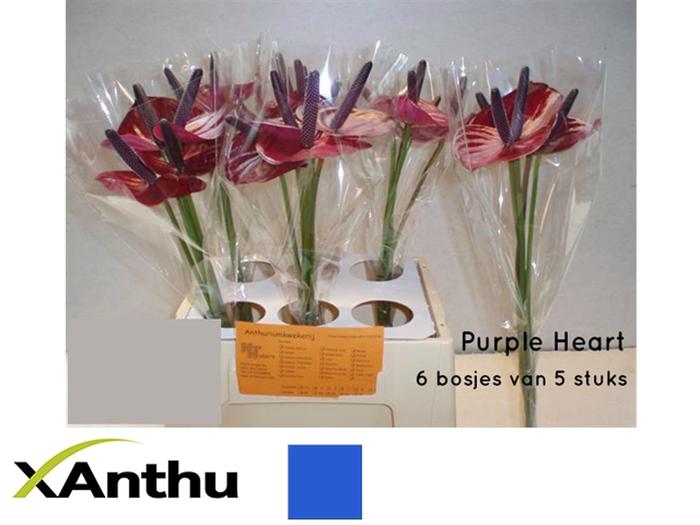 <h4>ANTH A PURPLE HEART</h4>