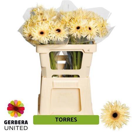 GE GS TORRES