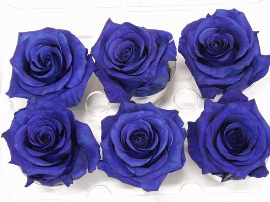 R Prs Blue