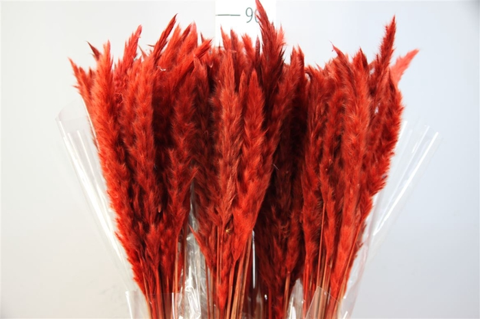 <h4>Pampasgras Dried Fluffy Red (20pcs)</h4>