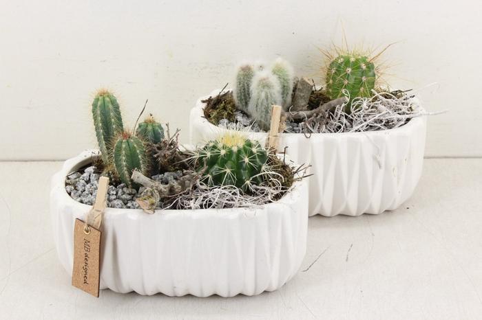 arr. MB Cactus - Ker. ovaal wit ribbel