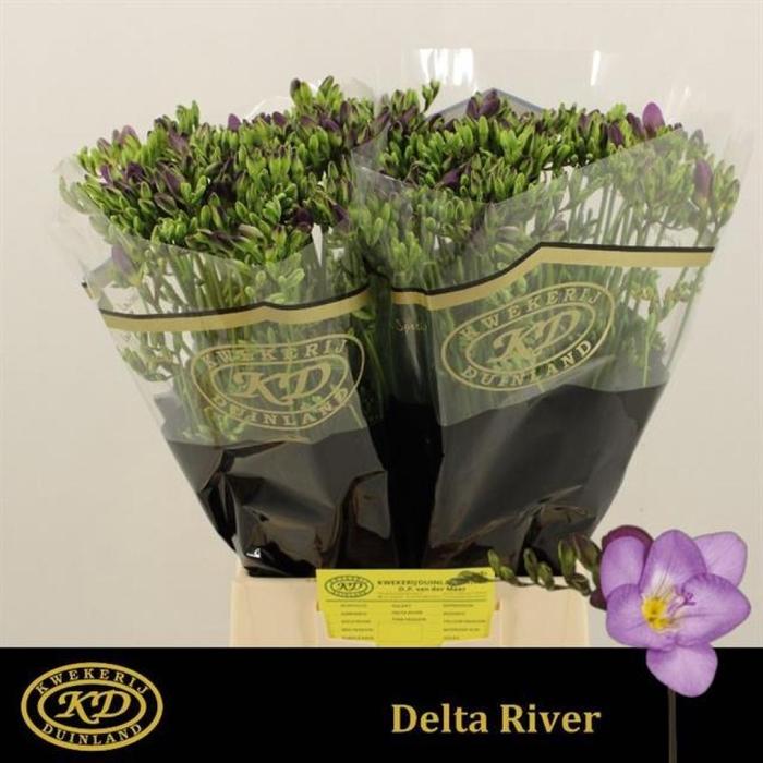 <h4>Fr En Delta River</h4>