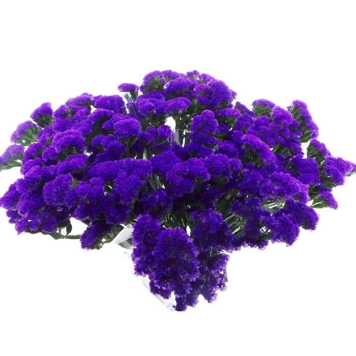 <h4>Bouquet Mono Statice Blauw x5 60cm</h4>