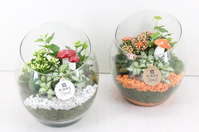arr. PL - Glas spider - oranje/wit