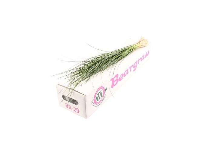 <h4>Beargrass X20</h4>