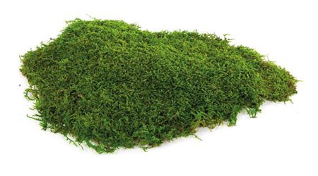 <h4>Preserved Green Moss 2,5 Kg</h4>