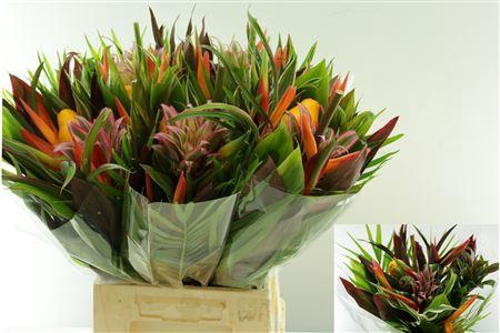 <h4>Bouquet Bonoumin</h4>