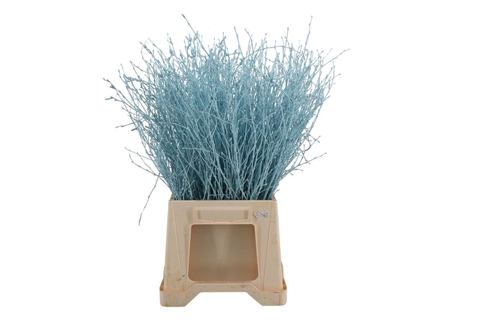 <h4>Berk ( Birch ) Light Blue</h4>