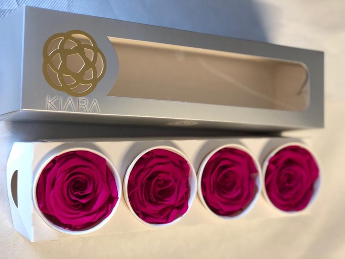 <h4>Super Rose Hot Pink (4)</h4>