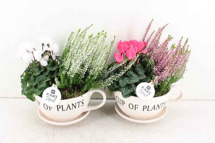 <h4>arr.. Outdoor PL - Cup of plants</h4>