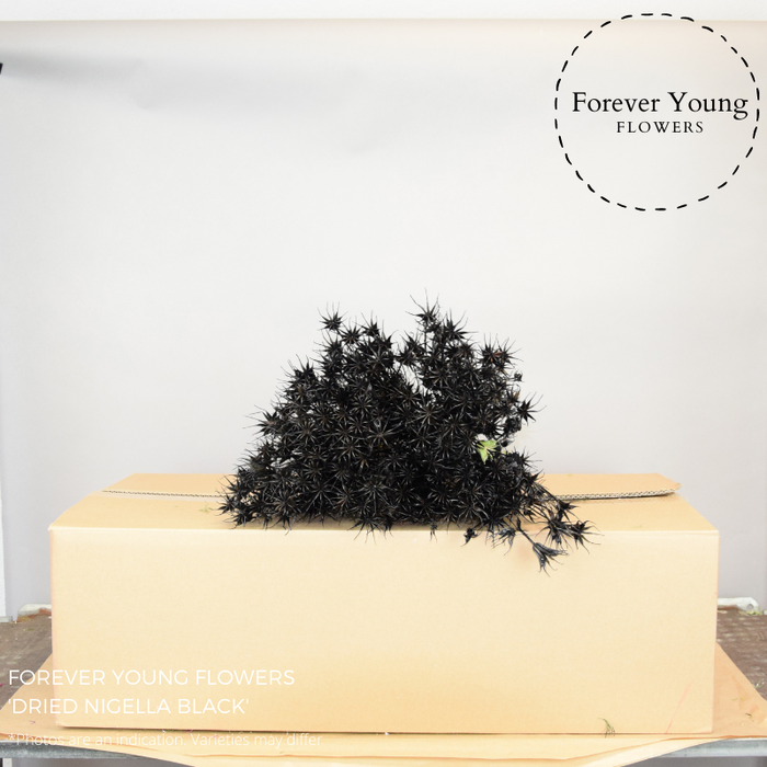 <h4>DRIED NIGELLA OR. BLACK</h4>