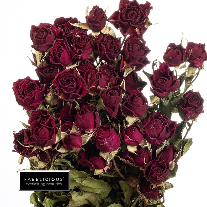 <h4>Dried Rosa tros Mirabel</h4>