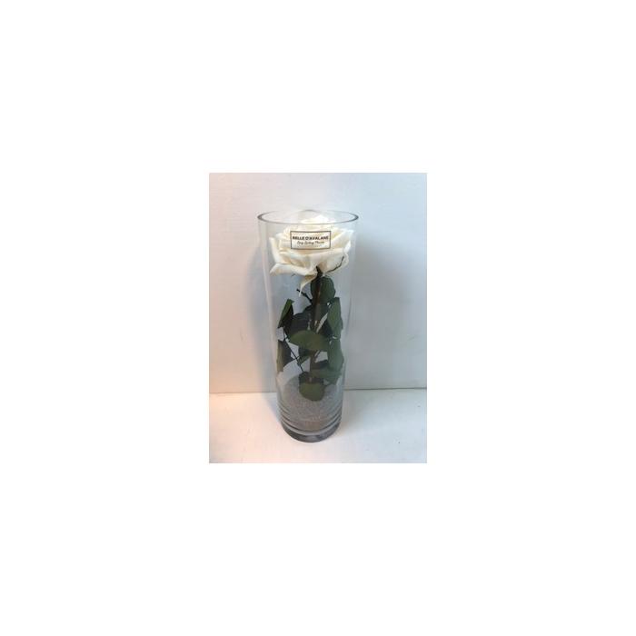 <h4>Glass d10x30cmh Rose Champagne</h4>