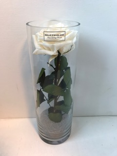 Glass d10x30cmh Rose Champagne
