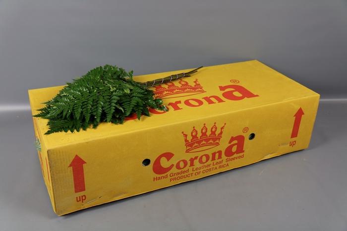 <h4>Ledervaren Extra Corona</h4>