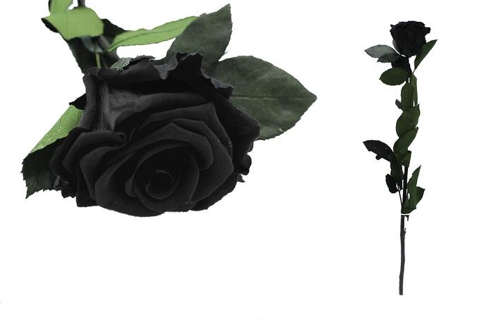 <h4>Rosa preservada negra black beauty</h4>