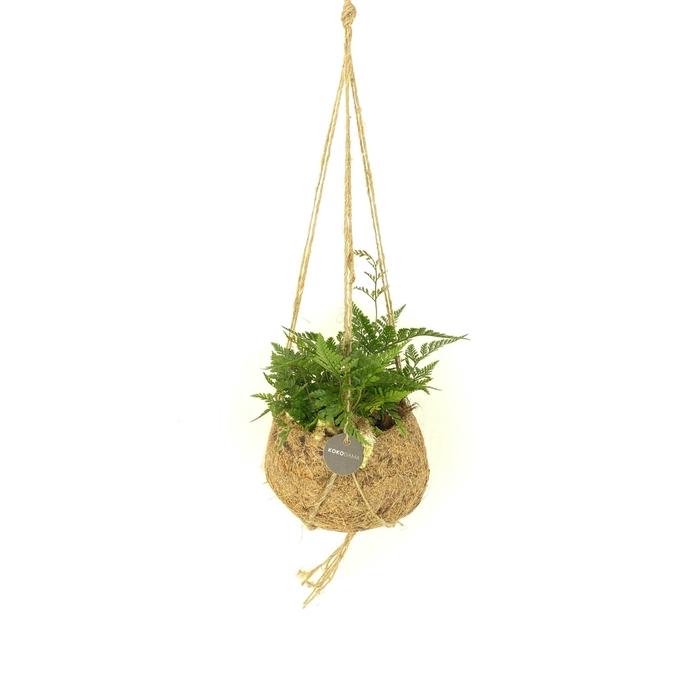 <h4>Kamerplanten gemengd groen 4 srtn</h4>