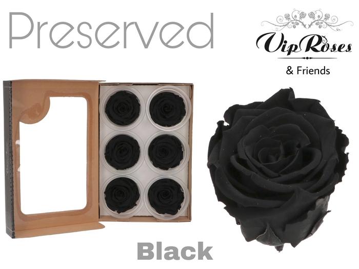 <h4>R PRESERVED BLACK</h4>