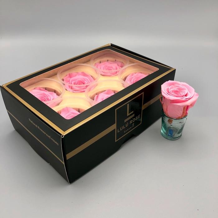 <h4>R PR Lulu (Medium) Baby Pink</h4>