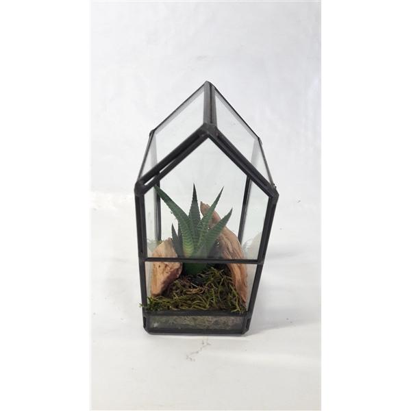 <h4>GHK8NAT Glass House Mini Terrarium + driftwood</h4>