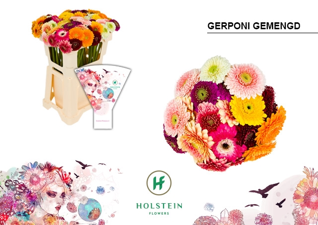 <h4>GE BV hoes Gerponi mix</h4>