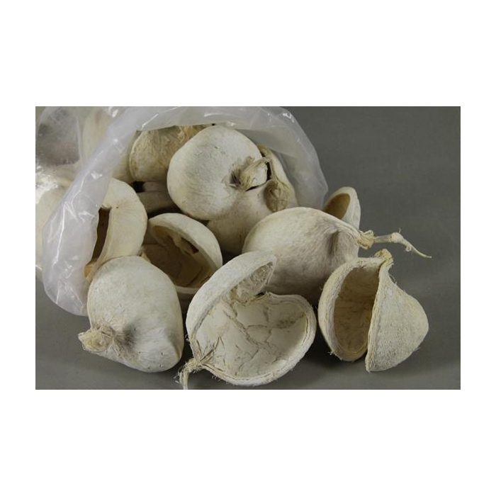 <h4>Buddha Nuts Bleached Bag(35)</h4>
