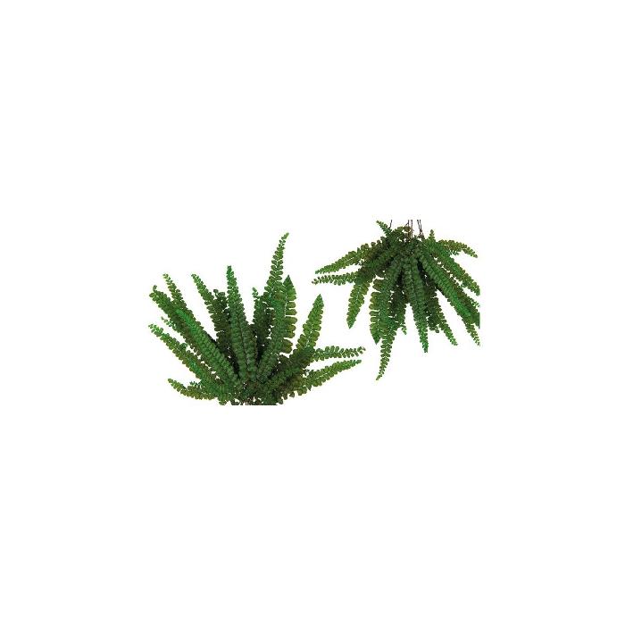 <h4>Felci Fern Green FFE/9103</h4>