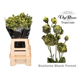 EUST G ROSANNA BLACK FOREST