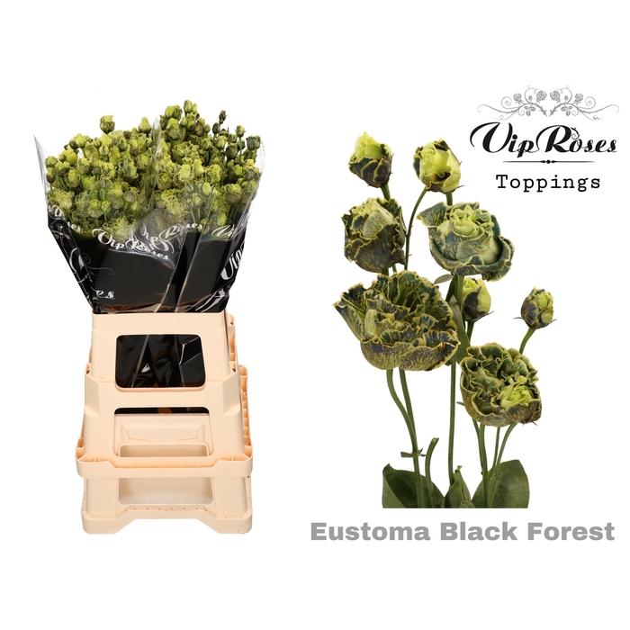 <h4>EUST G ROSANNA BLACK FOREST</h4>