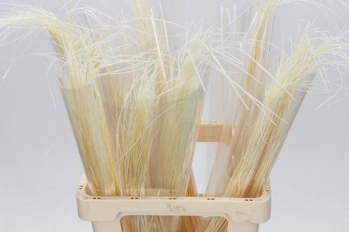 <h4>Beargrass Gebleekt (.bos)</h4>