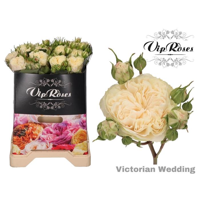 <h4>R TR VICTOR WEDDING+</h4>