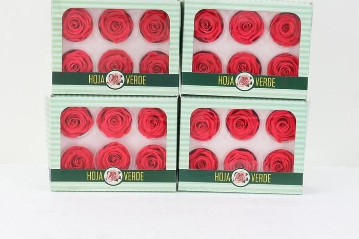 <h4>Preserved Roses Light Red</h4>
