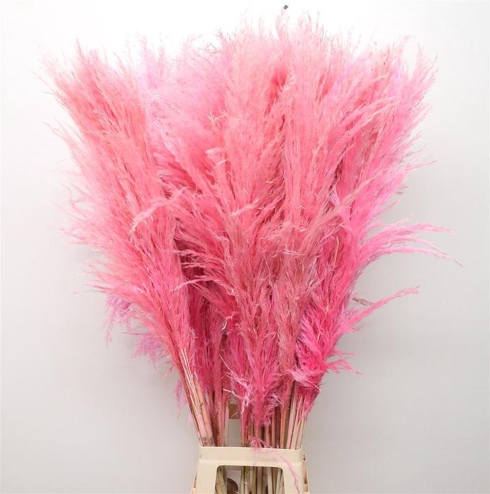 <h4>Corta Dried Pink 120cm</h4>