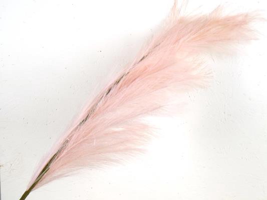 <h4>Af Pampas 130cm Lt. Pink</h4>