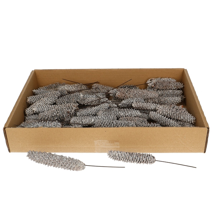 <h4>Pine cone Rasp/wire x75 bleeched</h4>