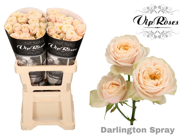 <h4>R TR DARLINGTON</h4>
