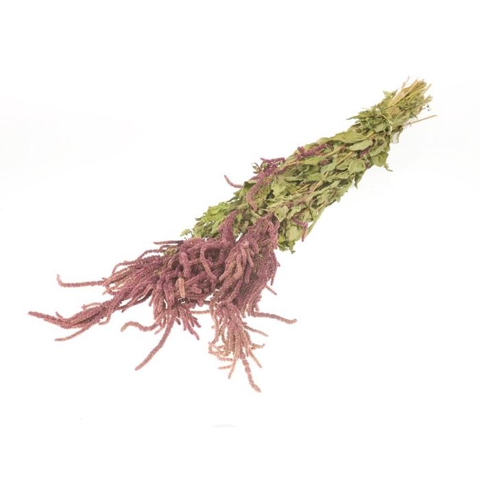 <h4>Amaranthus caud nat red</h4>