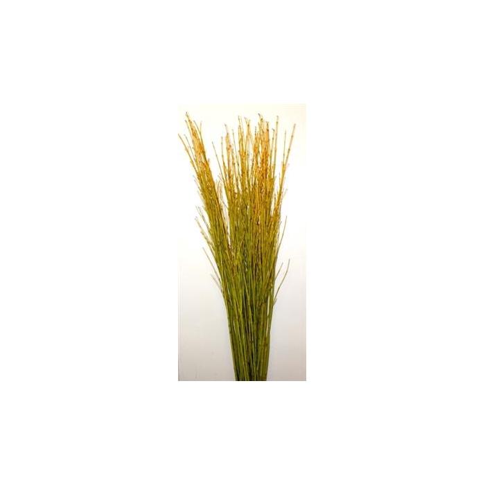 <h4>Cornus Geel 90 Cm</h4>
