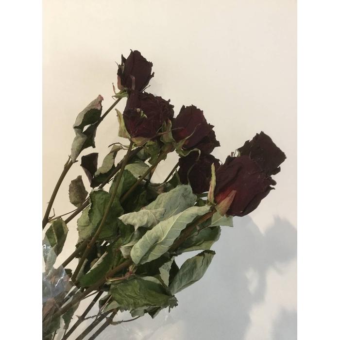 <h4>DRIED FLOWERS - ROSES DARKRED 10PCS</h4>