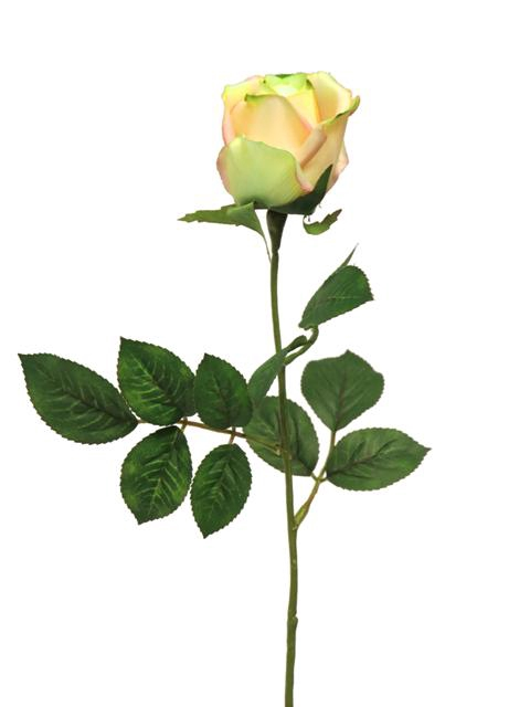 <h4>DF885056700 - Rosa susan bud yellow 65cm</h4>