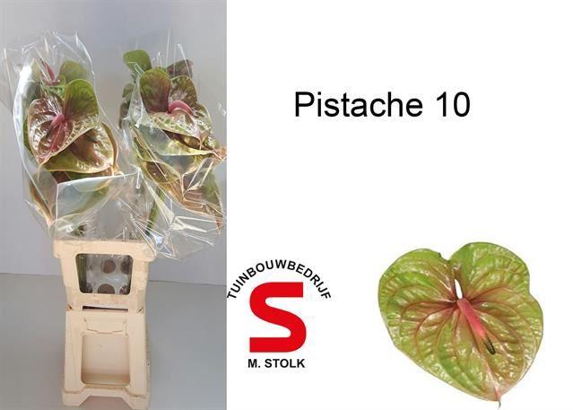 <h4>Anth Pistache</h4>