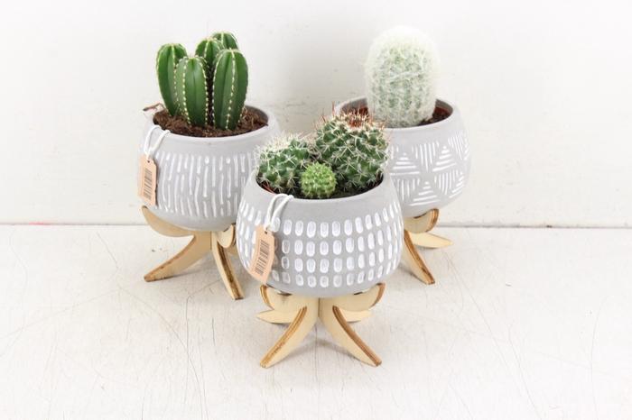 <h4>arr. UB - Ker. pootjes mix pot cactus L</h4>