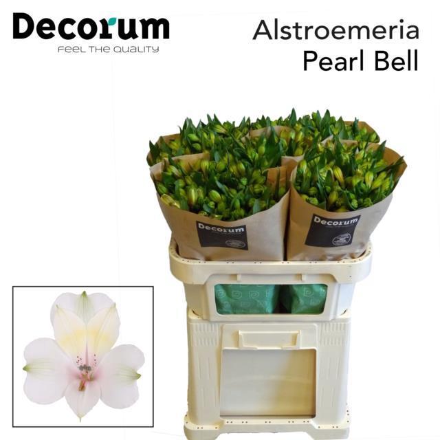 <h4>Alstr Pearl Bell Extra</h4>