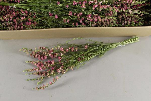 <h4>Df Delphinium Pink Bs 40gram</h4>